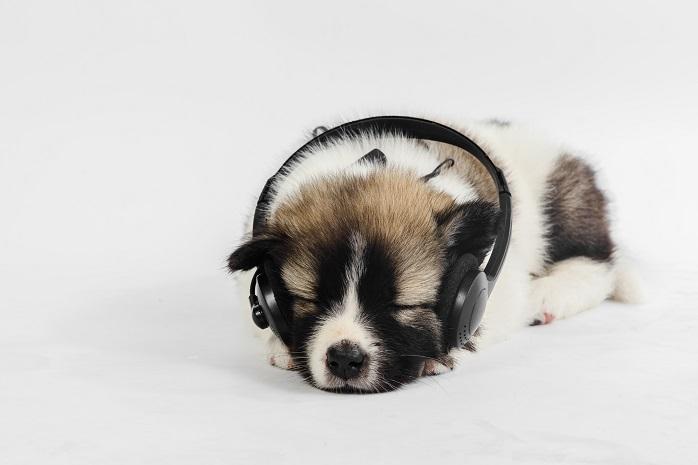 ヘッドフォンで音楽を聴く子犬